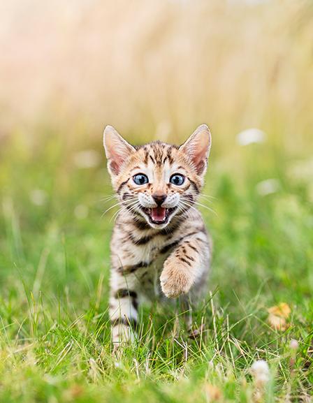 Les meilleures marques pour votre chat
