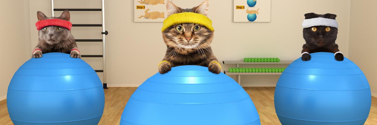 10 succestips om je kat slank te houden