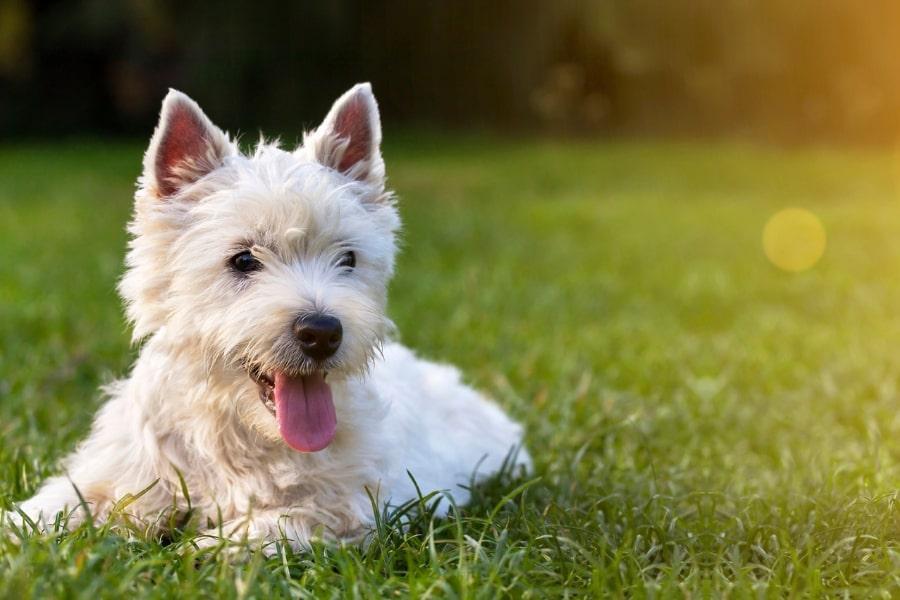 5 tips om je hond te behoeden voor blaasproblemen