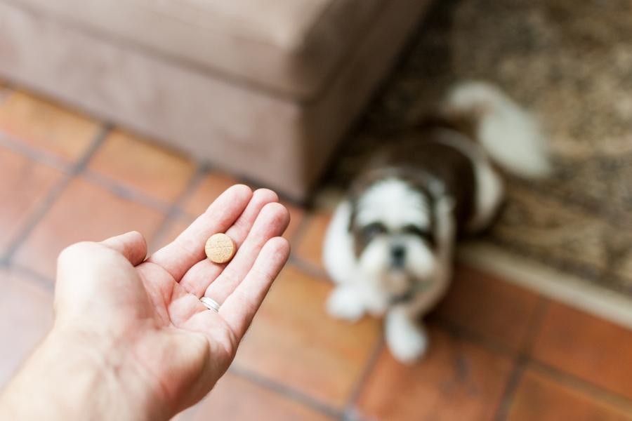 Je hond ontwormen