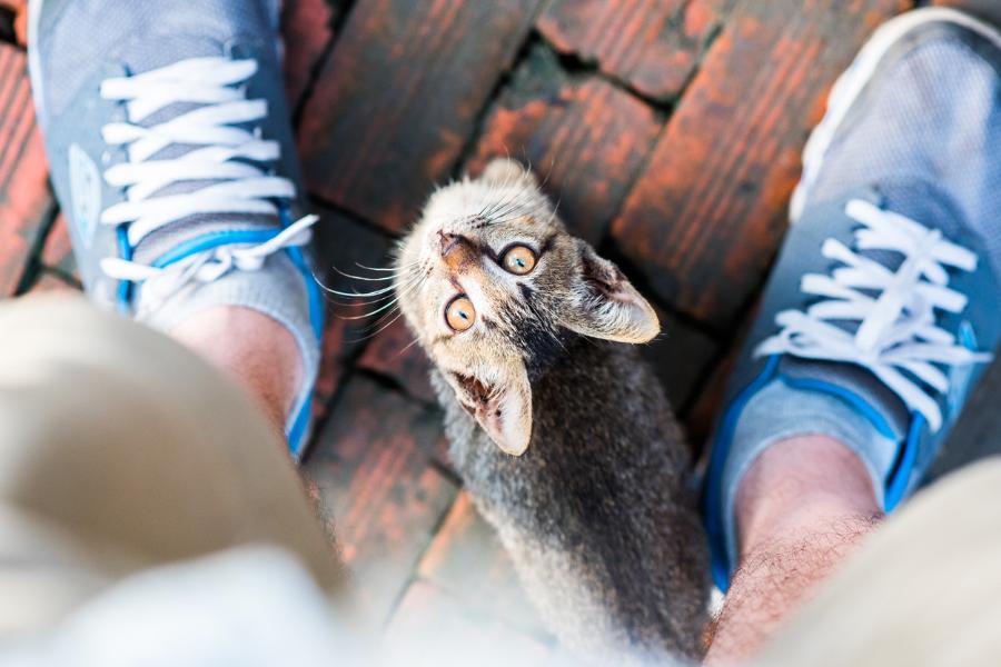 Bedelen en schooien afleren bij je kat