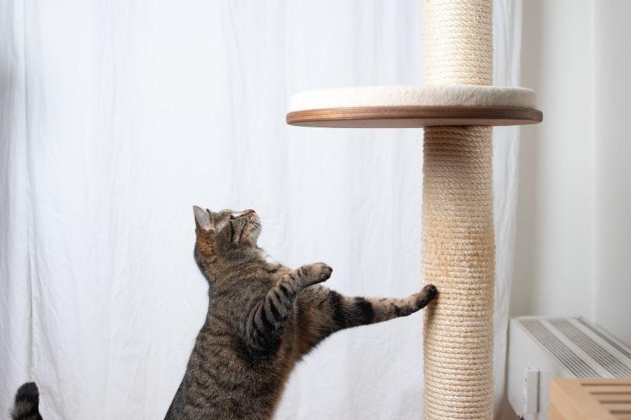 Waarom katten een krabpaal nodig hebben