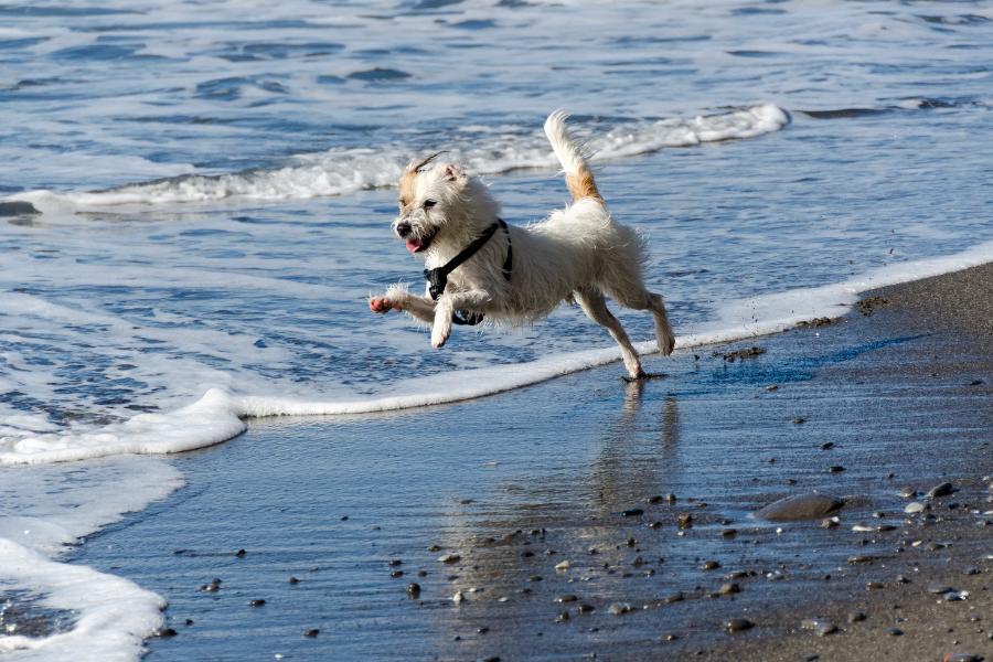 Patella luxatie bij de hond