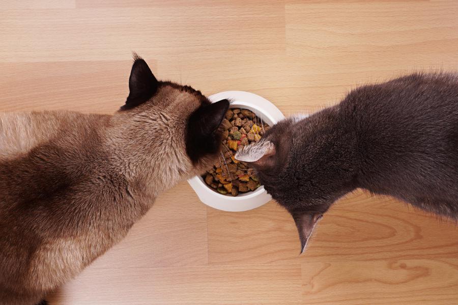 Welke voeding geef ik bij urinewegproblemen van mijn kat?