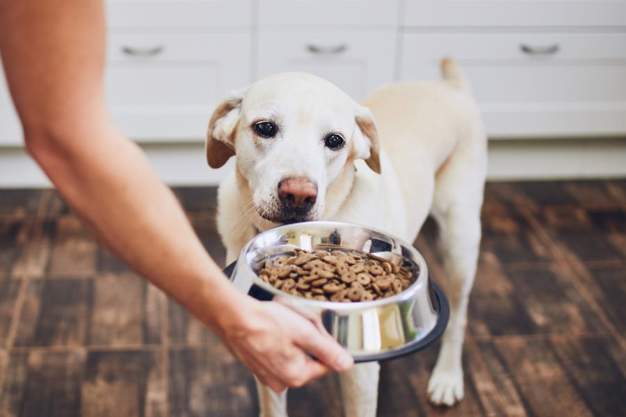 Welke voeding geef ik bij urinewegproblemen van mijn hond?