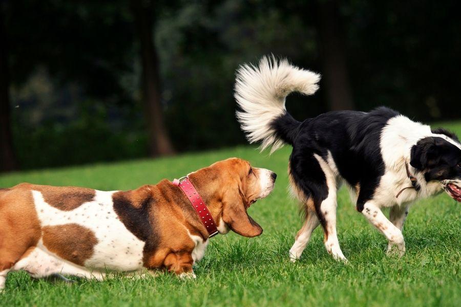 Winderigheid bij de hond