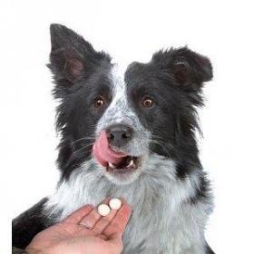 Je hond ontwormen: hoeveel keer, waarom en waarmee?