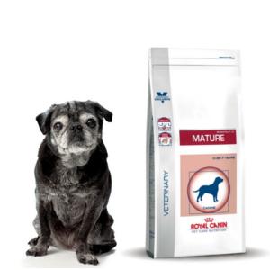 Alimentation pour chiens senior